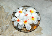 Jasmin flowers as SPA decoration, Bentota, Sri Lanka — Stock Photo