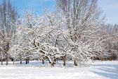 Trees covered with snow in Oleksandriya Park, Bila Tserkva, Ukra — Stock Photo