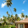 Holiday villa at the popular hotel and palms, Bentota, Sri Lanka — Stock Photo