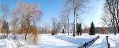 The panorama of trees and river covered with snow in Oleksandriy — Stock Photo
