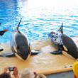 TENERIFE ISLAND, SPAIN - MAY 26: The Orcas show in Loro Parque o - Stock Photo