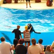 TENERIFE ISLAND, SPAIN - MAY 26: The Sea Lions  show in Loro Par - Stock Photo