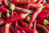 Red hot chili peppers — Stockfoto