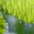 Rain-drops on the the fresh shoot — Stock Photo