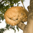 Cat climbing tree — Stock Photo #9342075