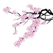 Branch of cherry tree — Stock Vector