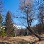 Spring landscape — Stock Photo #8345789