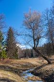 Jarní krajina — Stock fotografie