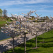 City park in the spring — Stock Photo