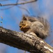 The squirrel on a tree - Stock Photo