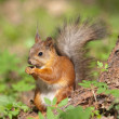 Squirrel in the spring — Stock Photo