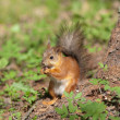 Squirrel under a tree — Stock Photo