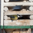 Titmouse in a wooden feeding — Stock Photo
