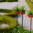 Stock Photo: Flowers in garden