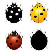 Set vector illustration of ladybirds — Stock Vector