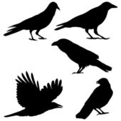 Set of vector images of crows — Stock Vector