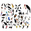 Collection of vector images of birds — Stock Vector #9982262