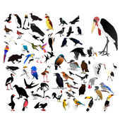 Collection of vector images of birds — Stock Vector