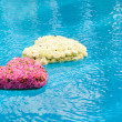 Flower hearts in water — Stock Photo #8735931
