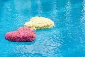 Kwiat serca w wodzie — Zdjęcie stockowe