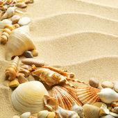 Mořské mušle s pískem jako pozadí — Stock fotografie