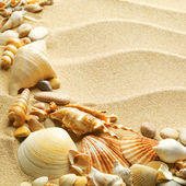 Sea shells with sand as background — Zdjęcie stockowe