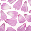 Cosmos petals — Stock Photo