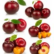 Set of ripe red plums fruit isolated on white — Stock Photo