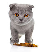 Little kitten eating pet food isolated on white — Stock Photo