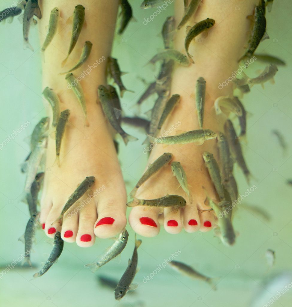 Fish spa pedicure stock photo dasha11 10184424 for Fish pedicure price