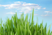 Fresh spring bokeh abstract background — Stock Photo