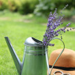 Lavender in watering can in the summer garden — Stock Photo