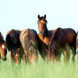 Young horses eating grass in field — Stock Photo #10204775