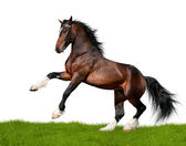 Bay horse isolated on white with grass — Stock Photo