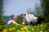 Niño y caballos pequeños en el campo — Foto de Stock