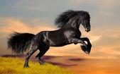 Svart häst galopp — Stockfoto