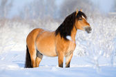 Bay horse in winter — Stock Photo