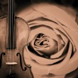Violin background — Stock Photo #10208445