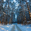 Winter forest — Stock Photo #10470059