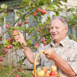 Old men in garden — Stock Photo