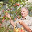 Old men in garden — Stock Photo #8369932