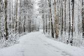 Zimní zasněžený les — Stock fotografie