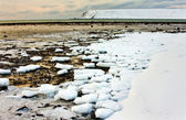 Sea ice is destroyed — Stock Photo