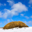 Tundra in winter — Foto Stock