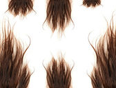 Brown hairs — Stock Photo