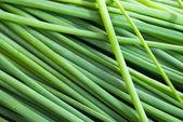 Green onion leaves — Foto de Stock