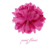 Peony flower on white background. Vector background for your design — Stock Photo