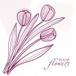 Tulip flowers. Vector background -  