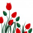 Stock Vector: Red tulips isolated over white