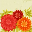 Chrysanthemums on grunge background - Stock Vector